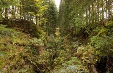 Bergbaulandschaft Eibenstock